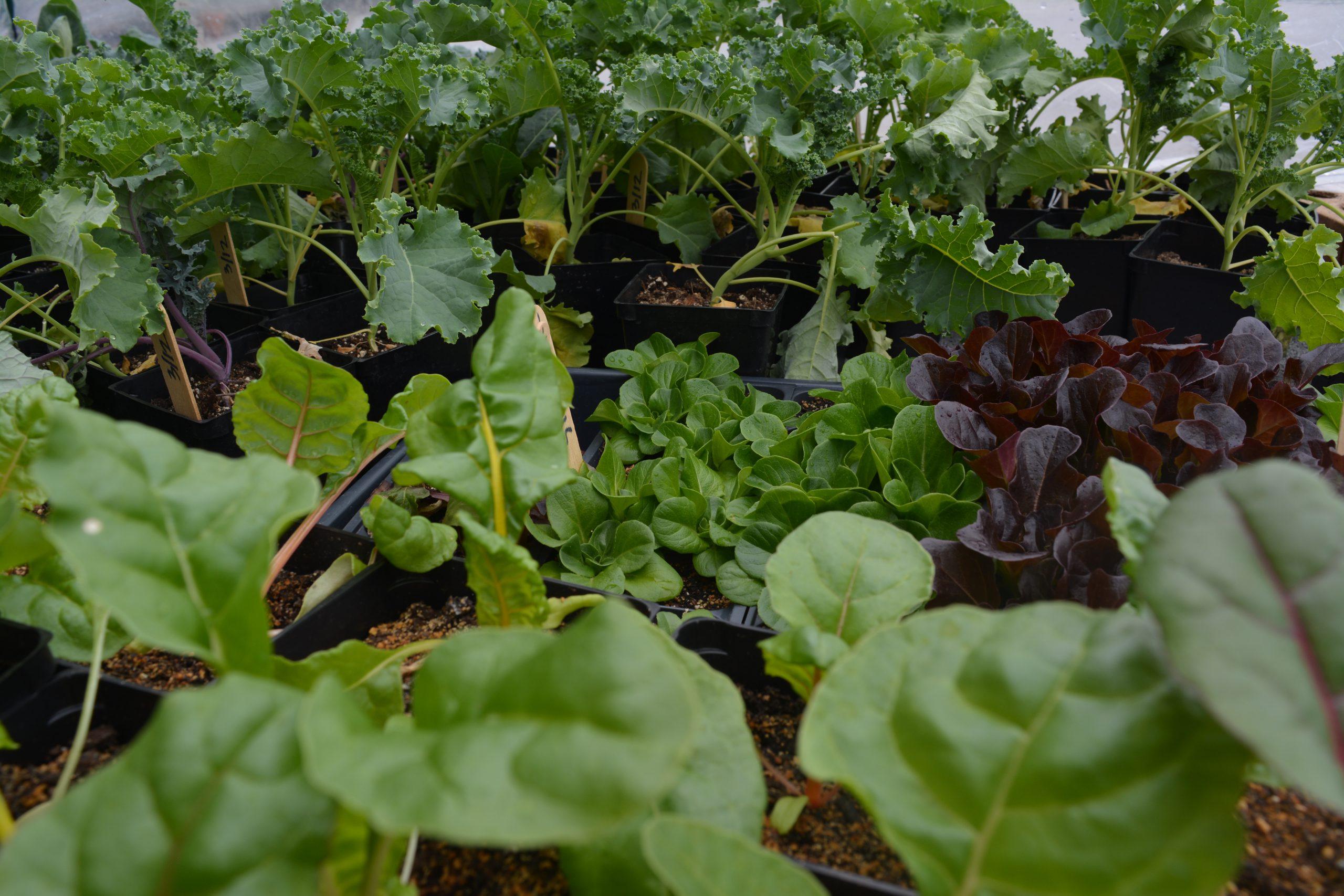Eenhoorn LLC Garden